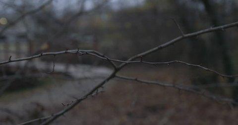 Walker in forest