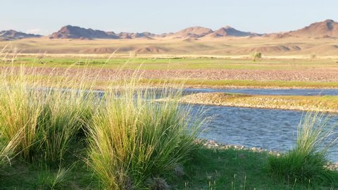 Mongolian grassland natural landscape with Achnatherum splendens in south-west Mongolia on bank of river Dzabhan-gol in Govi-Altay province