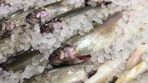 trout fish on ice. fish on ice. frozen fish for cooking