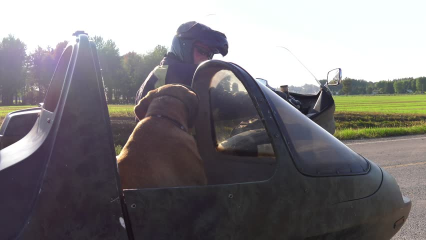 mastiff dog rides in motorcycle sidecar looks at you and drives away 4k