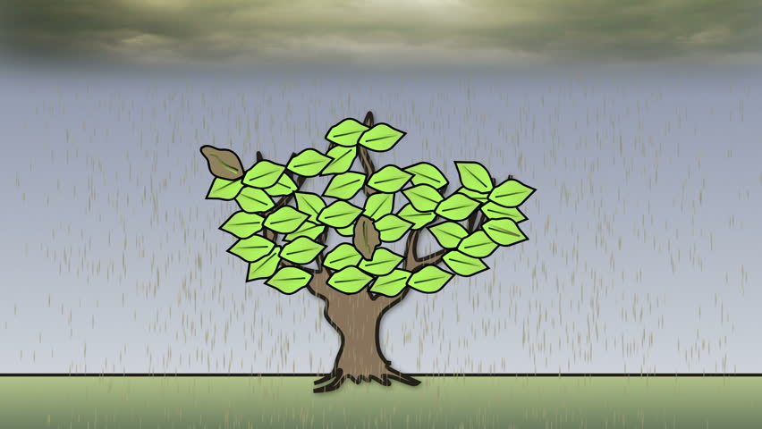 Acid Rain - Animation. The impact of acid rain on trees.