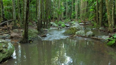 Streams along the Curtis Falls Trail on the Gold Coast Hinterland.
