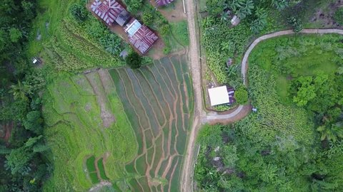 Drone shot top view rotation aerial jungle mountain village buildings rice fields footpath Flores / Drone shot top view rotation aerial jungle mountain village buildings rice fields footpath Flores
