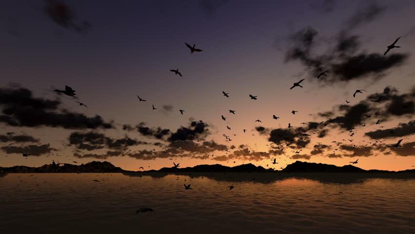 Flying Birds, Many Birds In Flight, Sunset, Dusk, Twilight ... | 852 x 480 jpeg 38kB