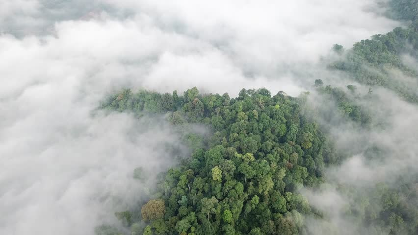 Aerial footage of rainforest. Jungle rain forest and clouds  | Shutterstock HD Video #35058001