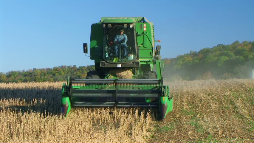 Farmer combining soybeans, driving downhill and head-on towards camera.