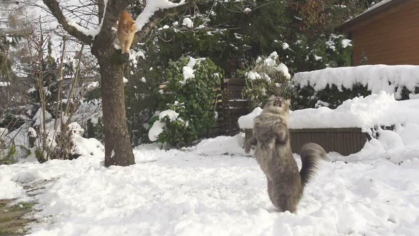SLOW MOTION: Cat catching snowball