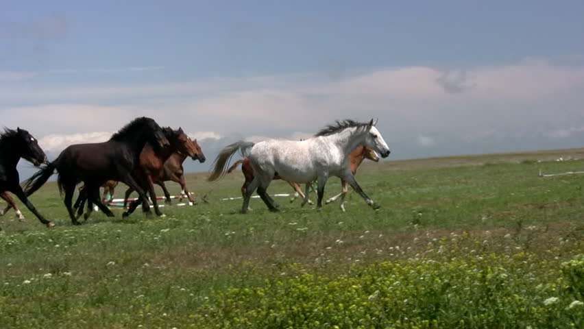 Herd of horses running on the steppes in the background cloudy sky. Slow motion