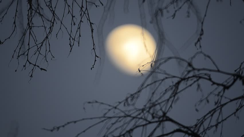 moon in the background tree branches