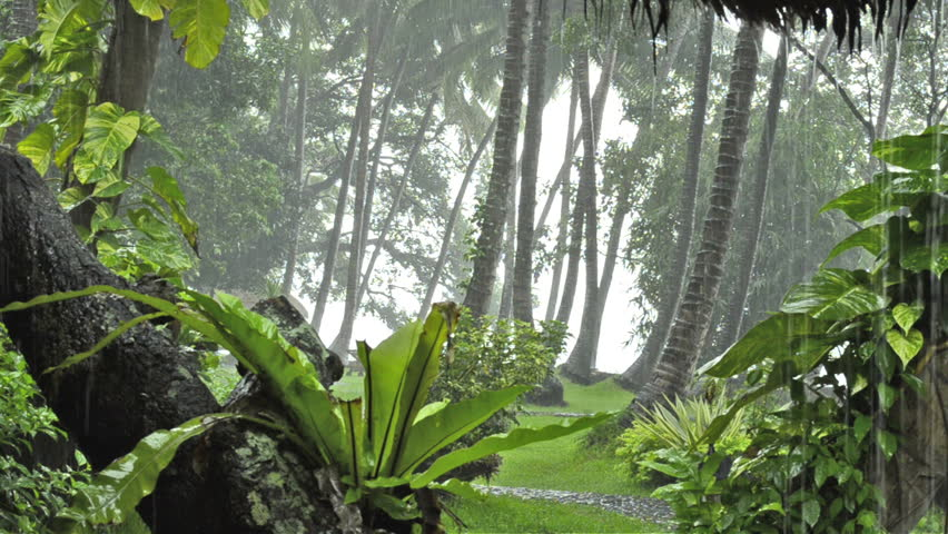 Stock Video Clip Of Heavy Rain In Tropical Forest Rainy