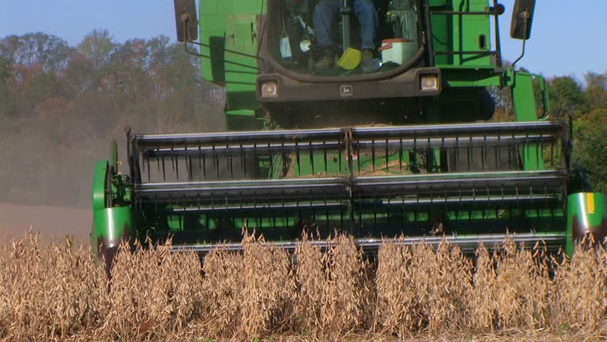 Farmer combining soybeans during harvest.