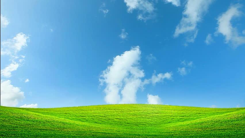 Green meadow stock footage