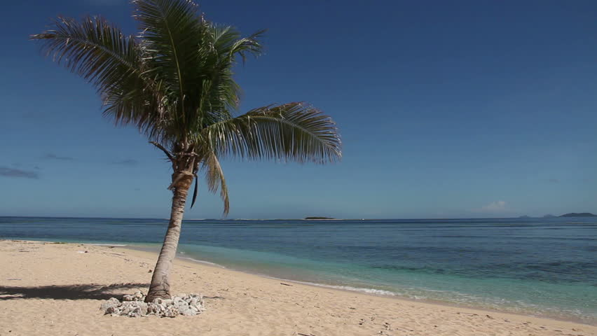 Palm Tree on Empty Beach