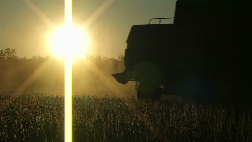 Farmer combining soybeans at sunset.