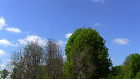 Sky and wood. PAL Time lapse