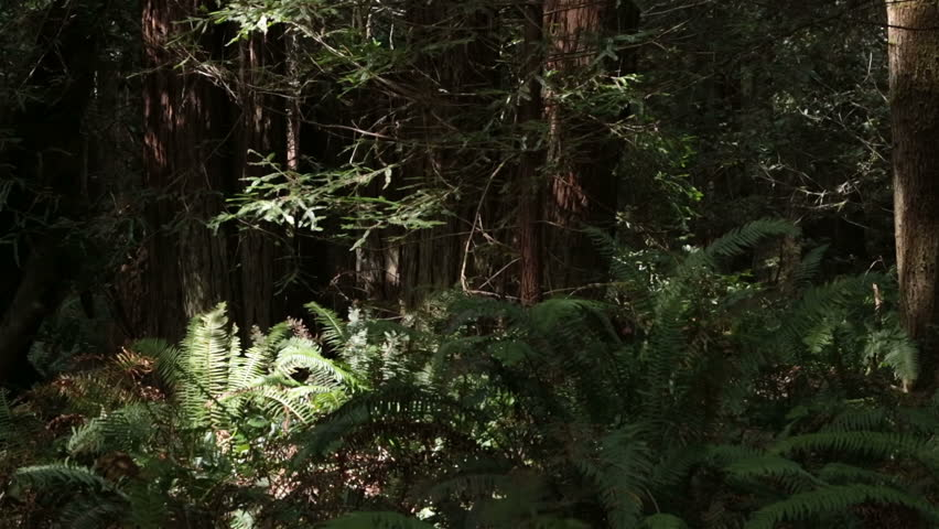 Enchanted Forest Loop With Glittering River, Fireflies And ...