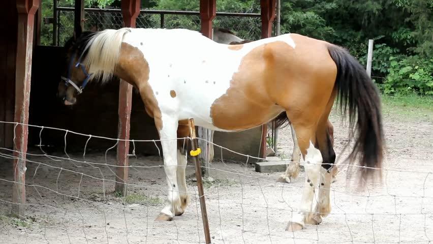 White horses standing
