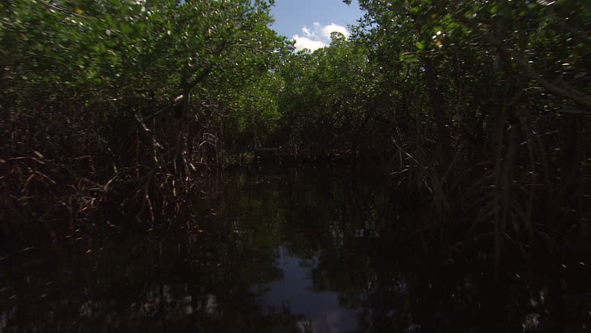 Shot of the everglades from an air boat as it moves through the water