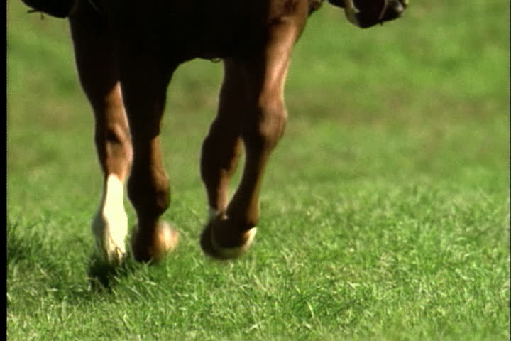 Legs of galloping horse as it approaches in slow motion. #4077571