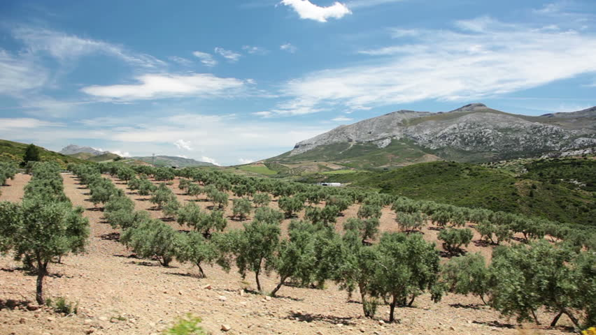 Spain. Andalucia. Driving on the road near the olive groves