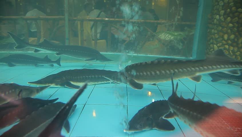 Mote Marine Laboratory amp Aquarium