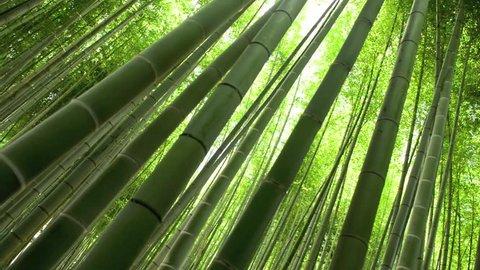 bamboo arashiyama kyoto japan