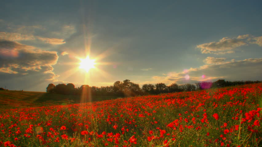 Sunset over poppies fields, high dynamic range time lapse clip