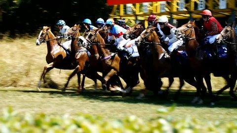 SAARBRÜCKEN - AUG 15, 2013: Horse racing in Germany. Part 1. Starting gate (Slow Motion)