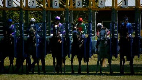 SAARBRÜCKEN - AUG 15, 2013: Horse racing in Germany. Part 5. Starting gate (Slow Motion)