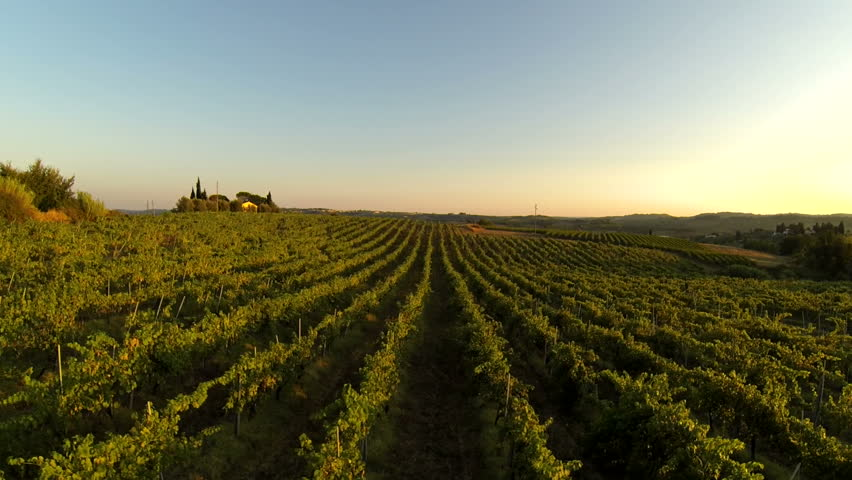 flying over a vineyard in Chianti region at sunset
