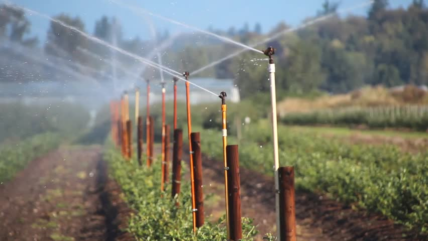 Hd0020a Farmers Crop Is Irrigated Industrial Irrigation A Fine Mist Is