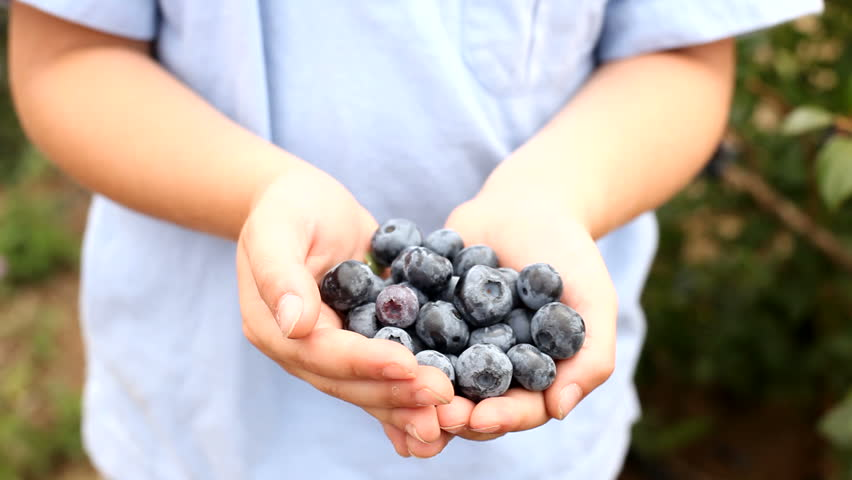 Boy holding blueberries in hands