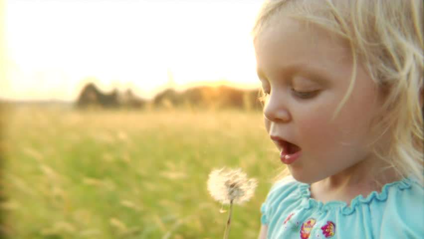 An adorable little girl attempts to blow dandelion seeds, but gives up and shakes the stem until the seeds detach. Three takes.