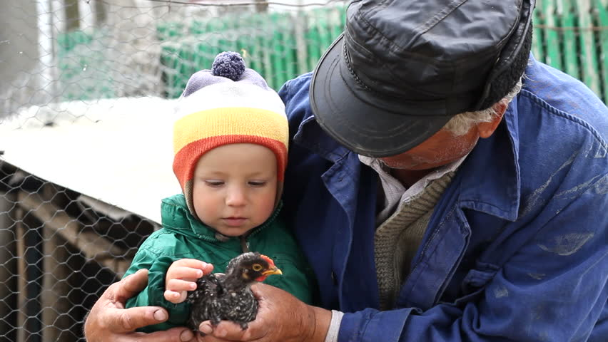 Grandfather hold the grandson in arms, baby learn to behave with animals