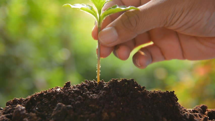 planting tree sprout