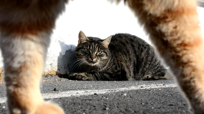 Cat scene