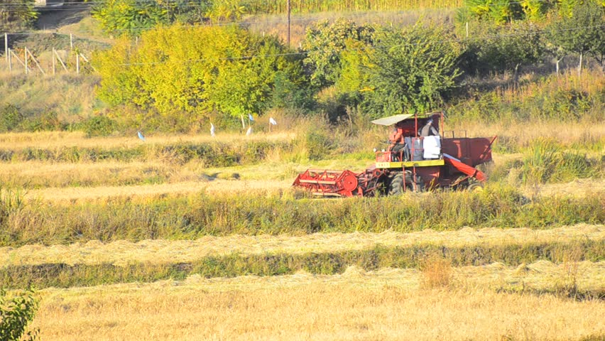 Combine Harvesting Field - Stock Video. A combine slowly works its way down a