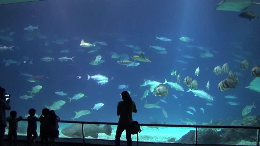 aquarium and people