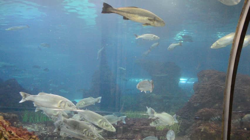 Country Spain - Barcelona Aquarium   Shutterstock HD Video #5002121