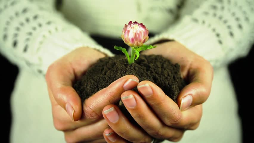 Hands Holding Plant Soil Growth Concept HD