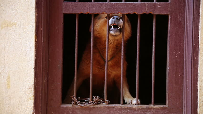 Dog barking locked in its cage