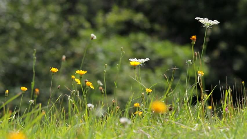 Splendid view, spring flowers gentle move in wind breeze on green plain