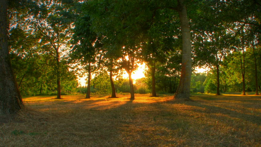 Sunset beams through trees in park, HD motorized time lapse clip, high dynamic range imaging