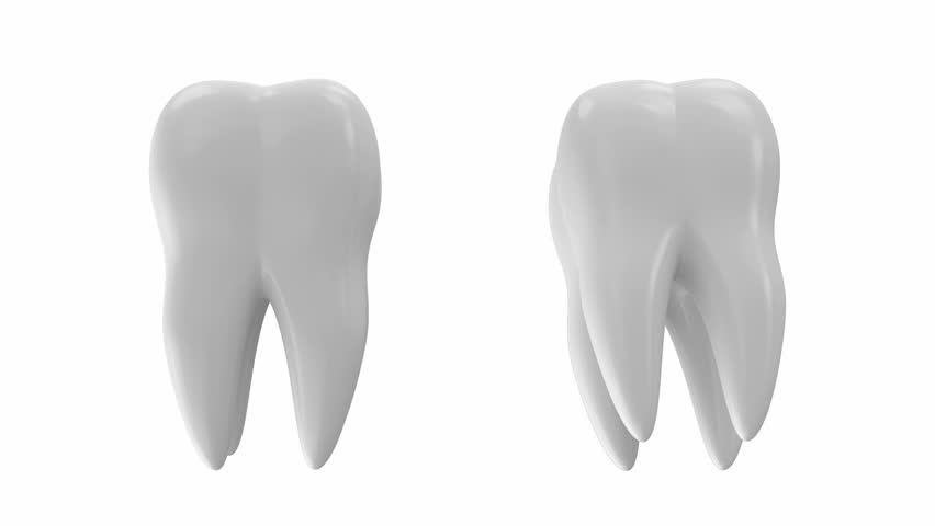 Animation of Tooth Rotation. Green Screen and Alpha Matte is Including. Seamless Looping HD Video Clip