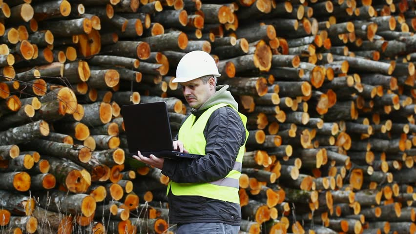 Forest employee near stacks of logs episode 1