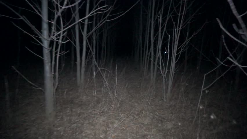 POV Shot As You Walk Through A Spooky Scary Forest At Night Passing By Bare