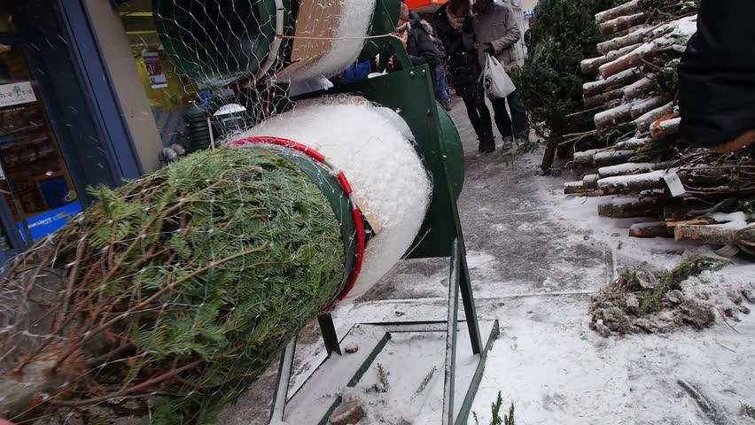 NEW YORK CITY - Circa December, 2013 - A Christmas tree salesman wraps a tree
