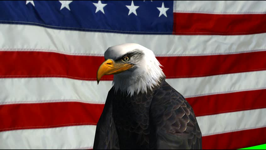 American Eagle with animated US Flag green screen Video Footage - Video background #5273501