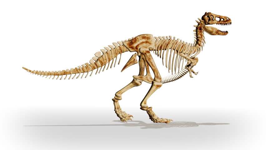 Dino T-Rex walking,loop