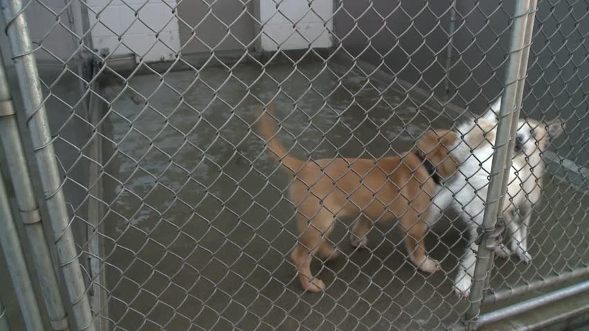 Adorable Sad Puppy Dogs In Shelter Behind Fence Depressed